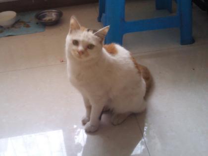 cat-food-03.jpg