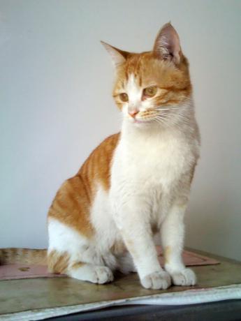 cat-food-00.jpg