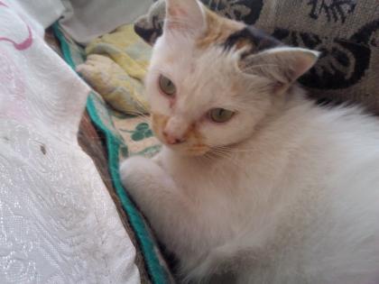 cat-food-04.jpg