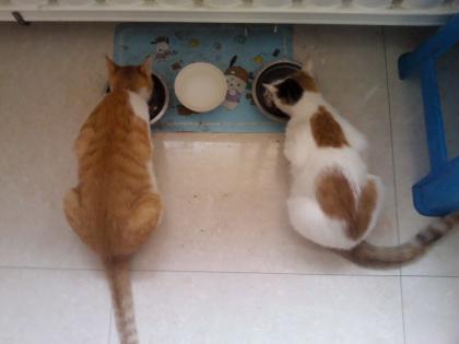 cat-food-02.jpg